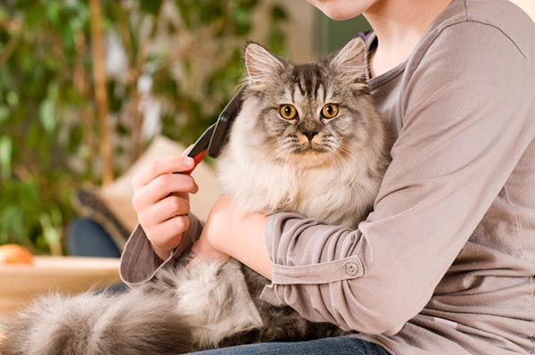 cat in a woman's lap being brushed