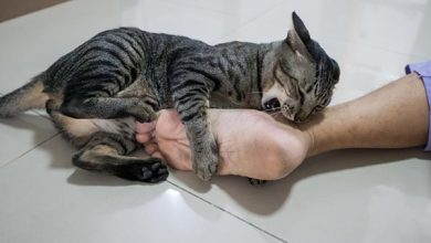 cat biting a persons foot