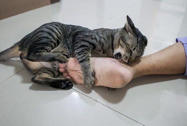 cat biting a persons foot