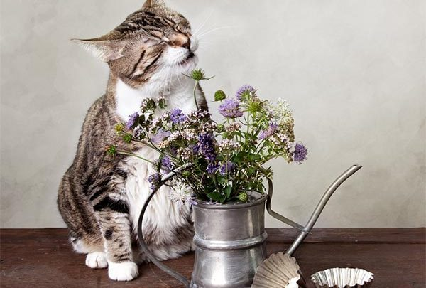 Cat sneezing with flowers