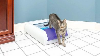 cat leaving electronic litter box