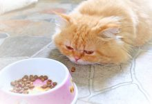 cat and food dish