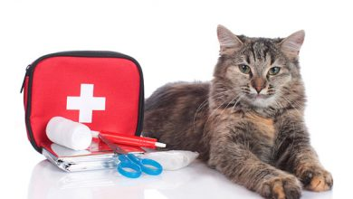 Cat laying next to a first aid kit