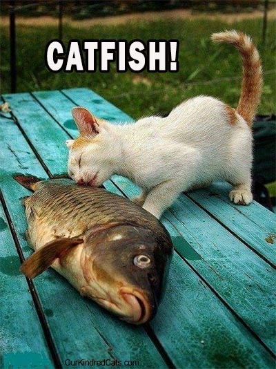cat smelling a large fish