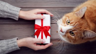 holding out a gift to a cat