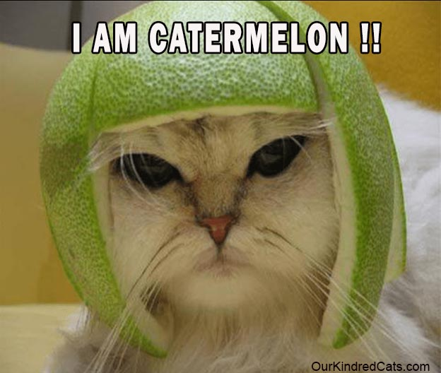 cat wearing hat made from a melon