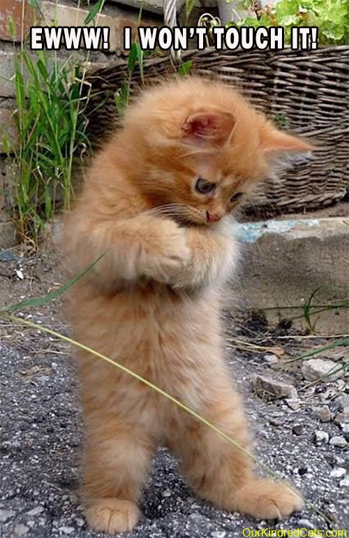 ginger kitten on hind legs in yard