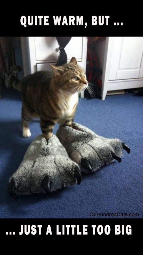 cat wearing giant monster slippers