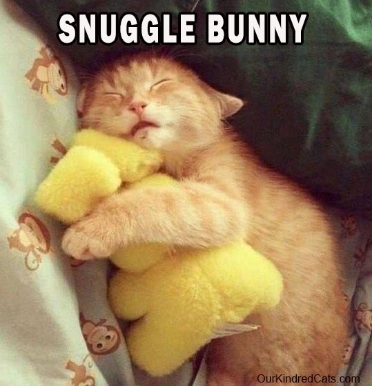cat  hugging and sleeping with stuffed toy