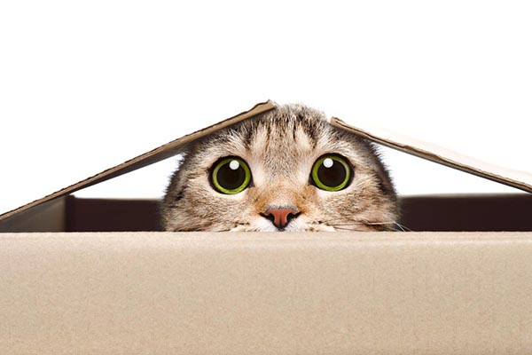Cat being curious peaking out of a box
