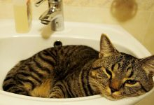 cat staying cool in the sink