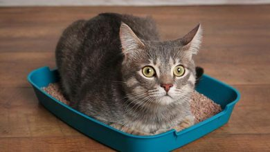 Cat laying in litterbox