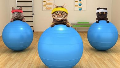 cats exercising with big blue balls